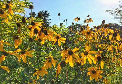 природа, цветы, бесплатные изображения