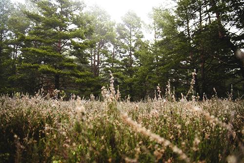 Природа, лес, бесплатные изображения
