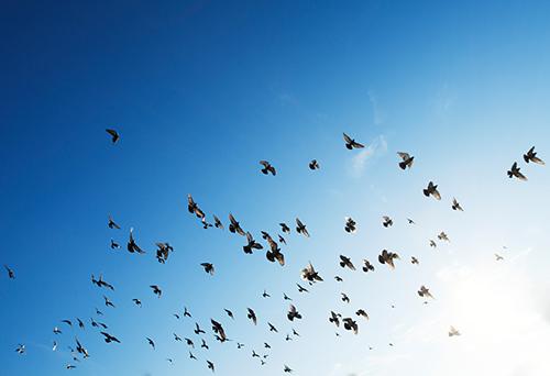 небо, птицы, бесплатные изображения